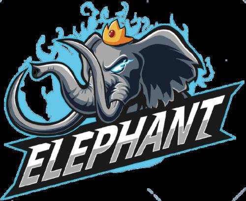 Elephant 4AM